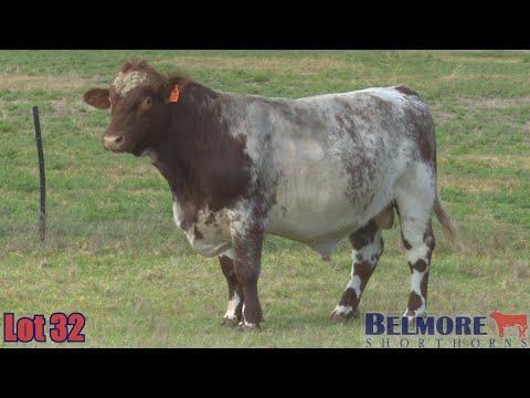 BELMORE LARRIKIN Q97