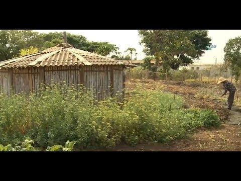 Irrigação de hortas agroecológicas com água da chuva
