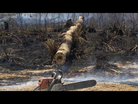 WWF: Χάθηκαν 430 εκατομμύρια στρέμματα δασών στα κύρια «μέτωπα»…