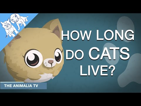 How Long Do Cats Live? Explained. Mp3