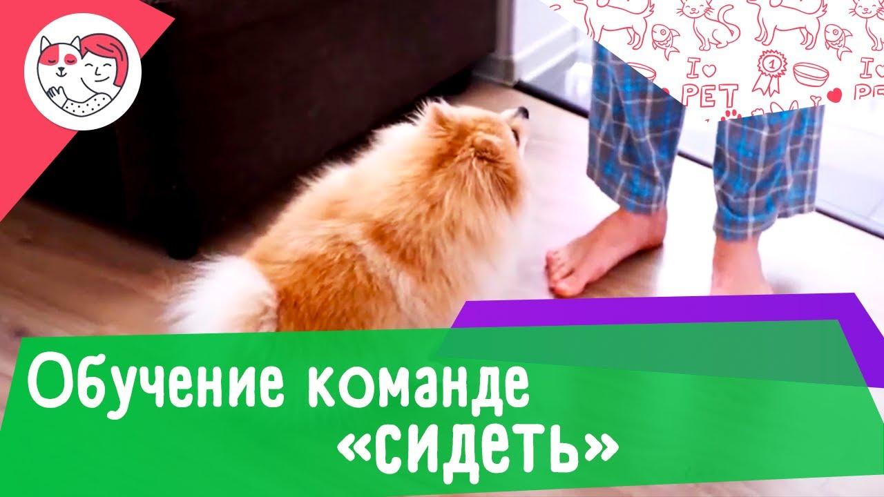 3 способа обучить собаку команде «сидеть»