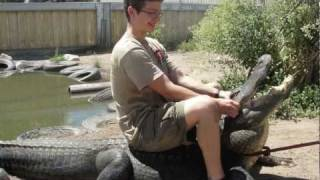 How to wrestle an alligator (and look epic too )