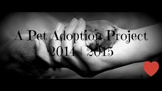 A Pet Adoption Project | Film 2014-2015