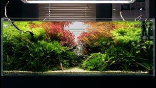Nasze inspiracje - zdjęcia akwariów i wycinków natury