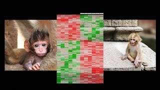 How early life experience is written into DNA | Mo...