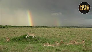 safariLIVE - Sunset Safari - December 16, 2018