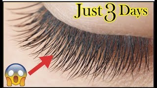 How To Grow Long Eye Lashes In Just 3 Days | Naturally Thick And Long Lashes | Fastest Growth