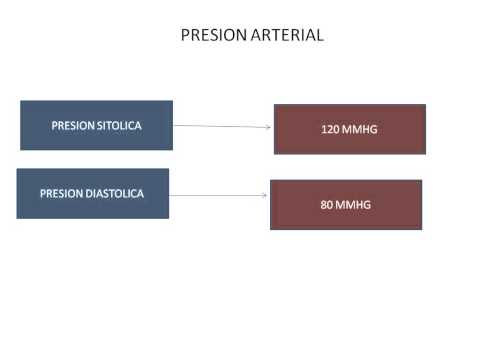 Baja presión sanguínea y la frecuencia cardíaca en seres humanos