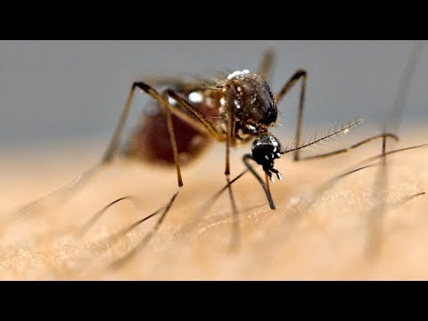 Proč lidé přitahují komáry?