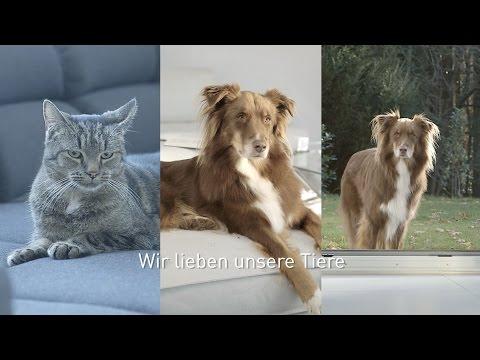 Thomas Aqua+ Pet and Family