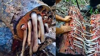 Would You Eat That? World's 10 Insane Foods