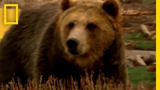 Grizzly Bear - Power