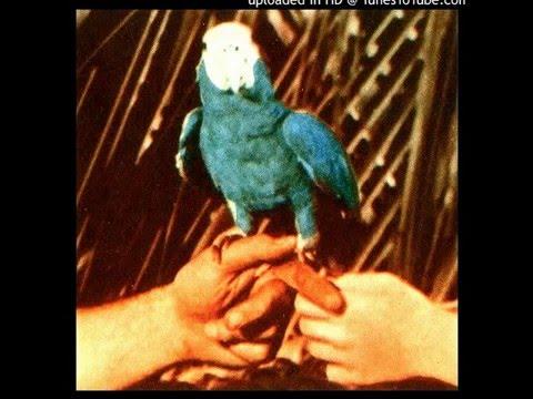 Andrew Bird - Puma