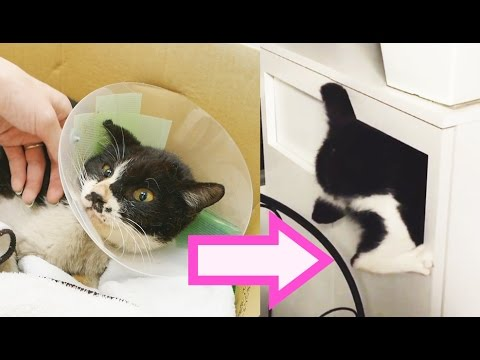 Meet Poki, the World's Most Annoying Cat