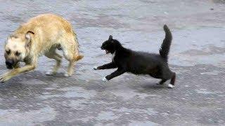 Смотреть онлайн Коты дерутся с собаками и побеждают их
