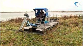 На озере Ильмень продолжается расчистка от травы и мусора