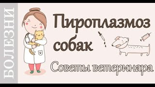Пироплазмоз собак, #Советы_ветеринара по лечению.