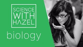 Genotype, Phenotype & Punnett Squares | 9-1 GCSE And IGCSE Biology | AQA, Edexcel, CIE, OCR, WJEC