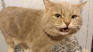 Кот говорит я обиделся :((