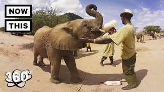 World Elephant Day: Elephant Rescue | Unframed by Gear 360 | NowThis