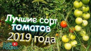 Лучший сорт томатов на 2019 год