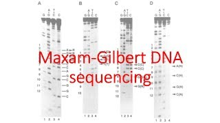 dna sequencing by maxam and gilbert method