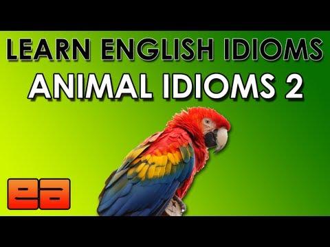 English Idioms - Animal Idioms - 2