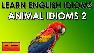 Animal Idioms - 2 - Learn English Idioms - EnglishAnyone.com