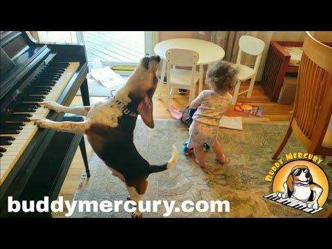 Buddy Mercury e Maninha dão show de música e dança