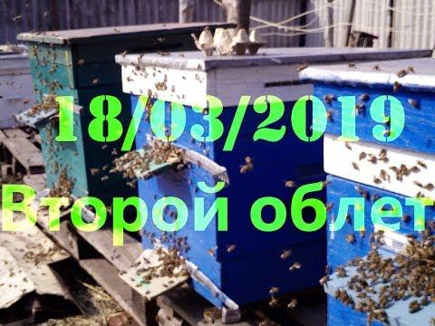 Второй облет в марте радует глаз пчеловода любителя. 18/03/2019