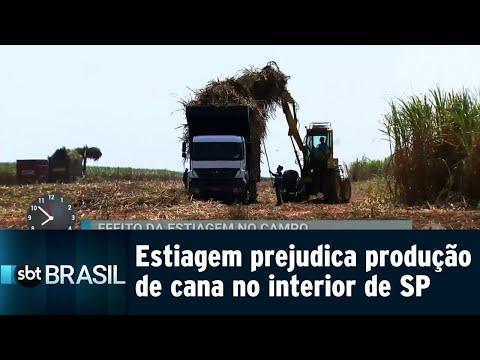 Falta de chuva prejudica produção de cana deve cair 15%