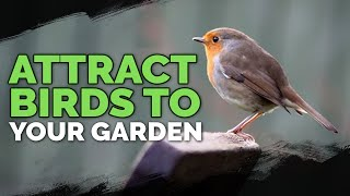 Attract More Birds: Bird Houses, Baths, And Feeders Explained