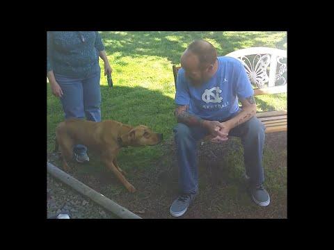 Пёс узнал хозяина по запаху