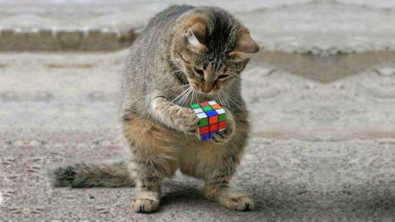 Эти счатстливые кошки 💗 подборка #3 фото