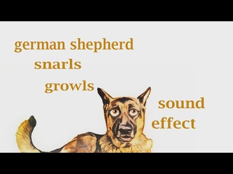 How A German Shepard Snarls And Growls - Sound Effect - Animation