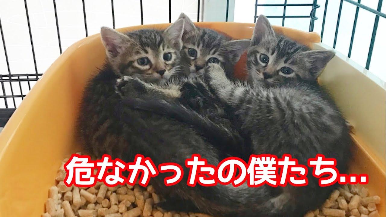 【保護子猫】離乳期の子猫を3頭保護しました。