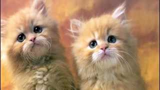Cat Pictures And Cat Sounds, Prank Your Dog - Excite Your Dog