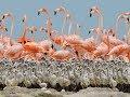 Extra Large Size Flymango Birds 03459442750 Zain Ali Farming in Pakistan