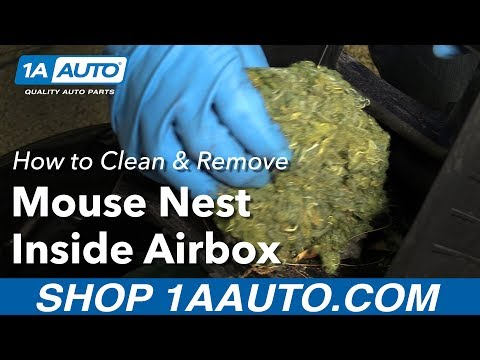 How to Clean and Remove Mouse Nest Inside Air Box