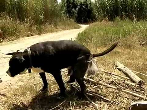 Bolsa recolectora de excrementos de perro, CANFRII