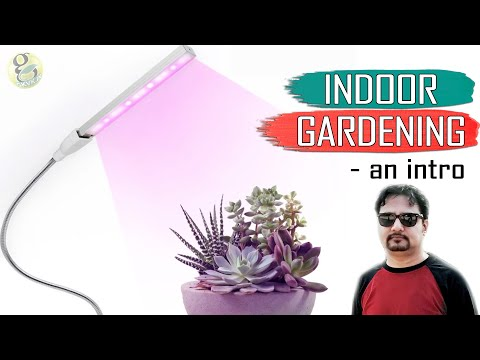 INDOOR GARDENING – An Introduction to Basics