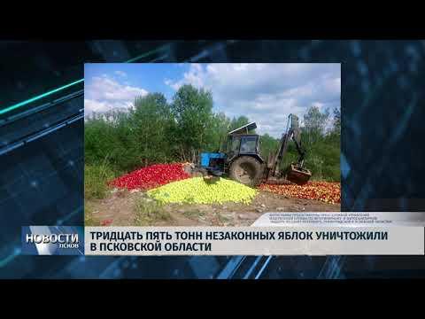 18.06.2019 / Тридцать пять тонн незаконных яблок уничтожили в Псковской области