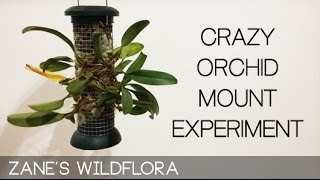 No Daily Watering Orchid Mount Experiment