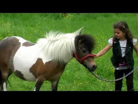 Mit Mein kleines Pony spricht Sissi sicherlich den Wunsch vieler Kinder aus. Denn, welches kleine Mädchen wünscht sich nicht gerne ein eigenes Pferdchen? Sissis Hitvideo stammt aus dem Jahre 2011.