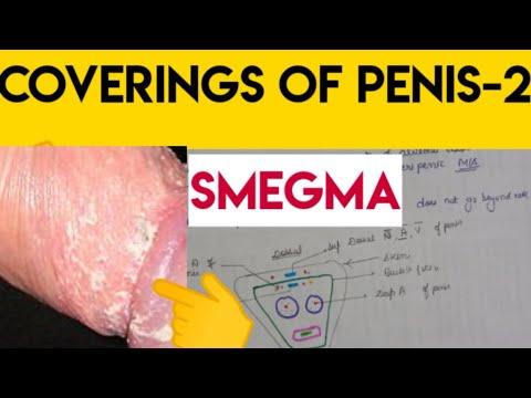 Szamár hosszú pénisz
