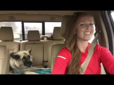 Собака с хорошим музыкальным вкусом