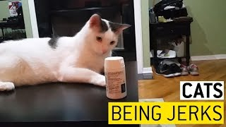 Cats Messing With Your Stuff || JukinVideo