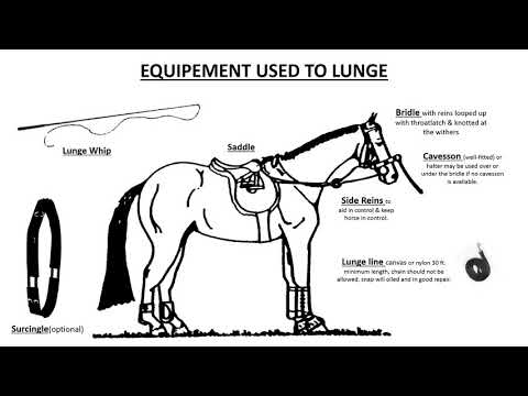 The Art Of Lunging A Horse - YouTube