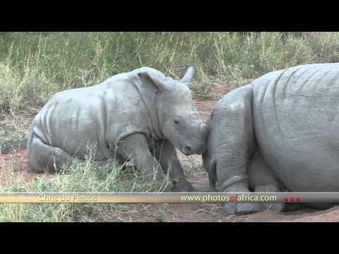 Video of Kruger Park