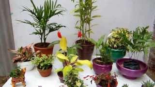 Las macetas y las plantas de interior